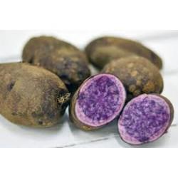 Brambory fialové