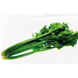 Celer řapíkatý s naťí